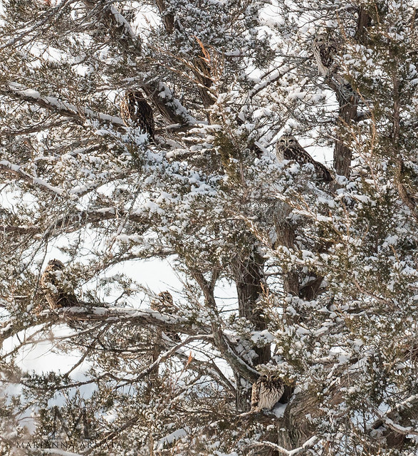 how many owls can you spot?