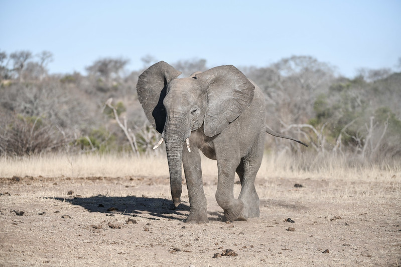 2278 Elephant