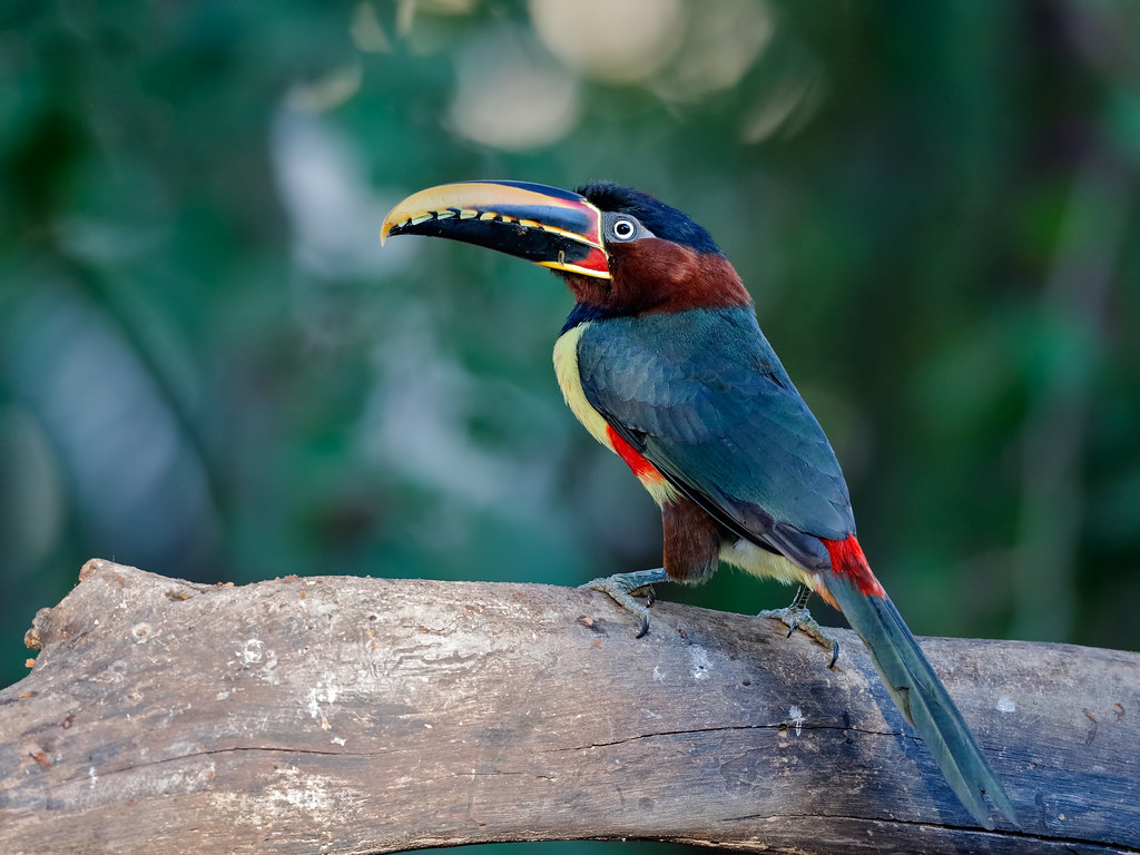 Pantanal_0563