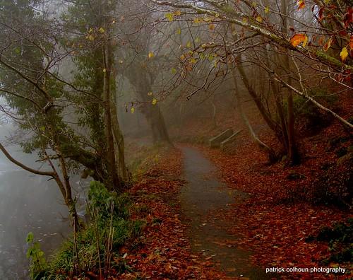 fog nature landscape trees woods leaves donegal ireland buncrana swanspark