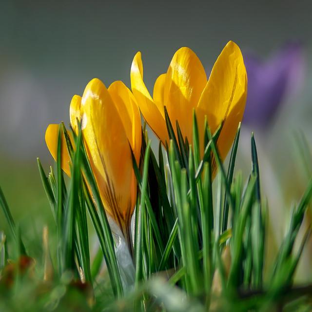 Yellow spring...
