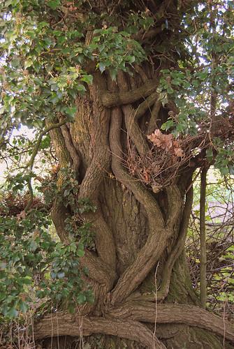 {Tree Hug}FCC155 | by framcameraclub