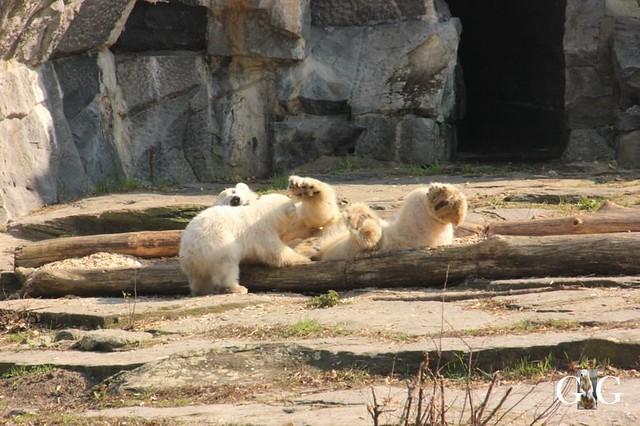 Besuch Tierpark Friedrichsfelde 06.04.2019135