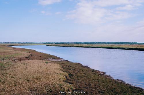 Econlockhatchee River (Last Gasp)
