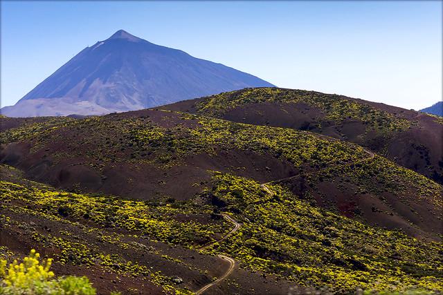 La primavera en las lavas. El Parque Nacional del Teide. Весна на лавовых склонах.