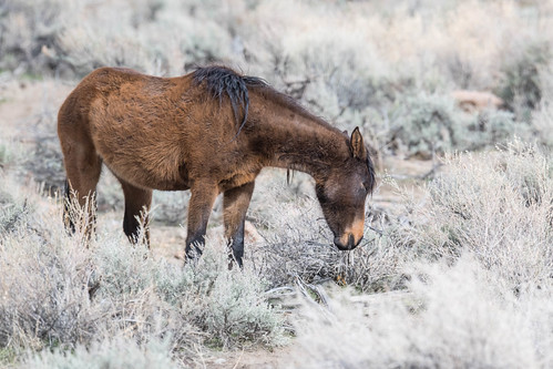 So. Meadows Mustang | by byjcb