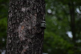 Insulator in the forest