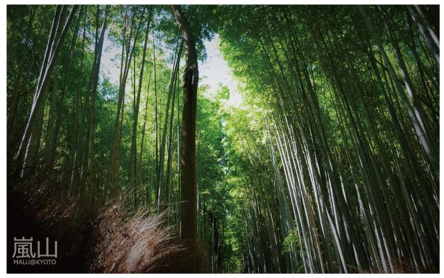 嵐山半日遊-29