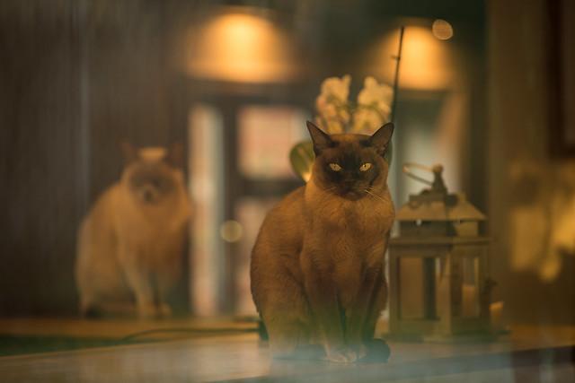 Cats through the window
