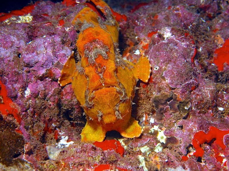 Hawaii Black Rock Misc. Beautiful Pictures 147 - Version 2