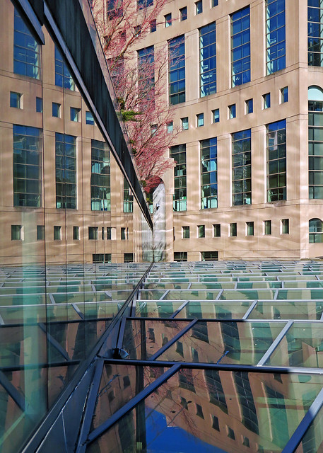 Sunny day library reflections