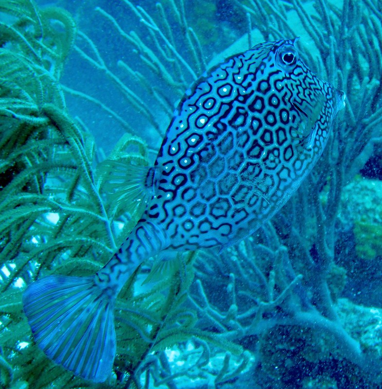 Aruba scuba shots videos 181 - Version 2