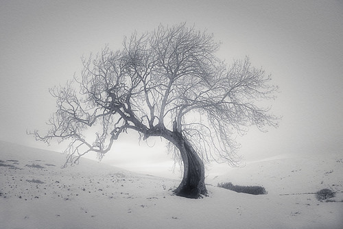 Frandy Tree | by ShinyPhotoScotland