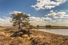 Hijkerveld Drenthe landschap