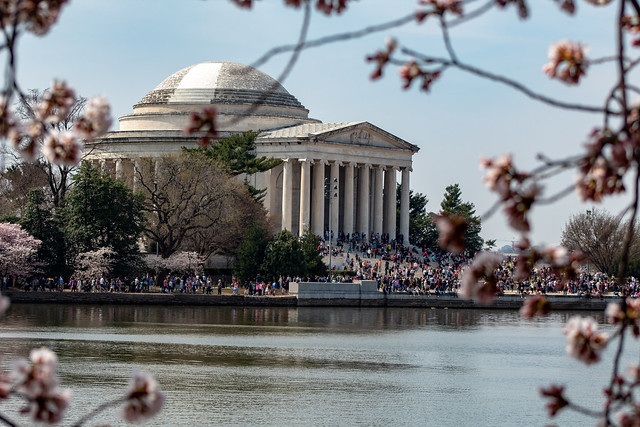 Jefferson Memorial During Cherry Blossom Festival