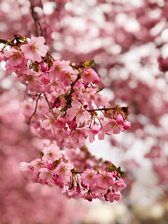 It's Almond Blossom time | by ANBerlin