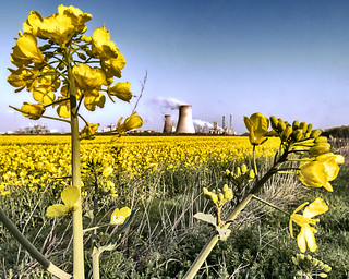 Yellow rapeseed field Saltend | by Ray Duffill