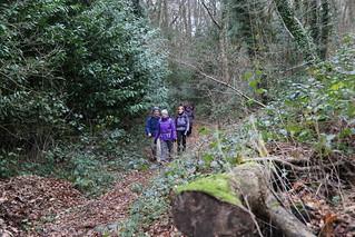 Walk in woods - near Brook, Greensand Way