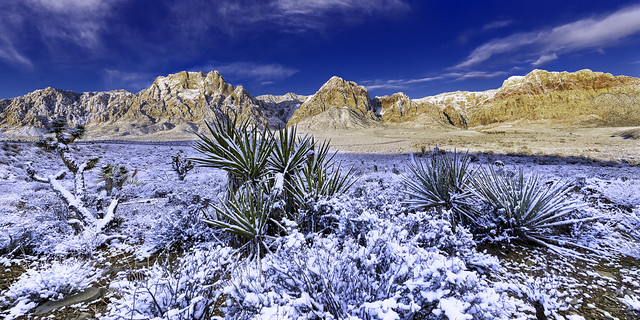 0246937642152-108-19-02-Snow on the Ground in Red Rock Canyon-13-HDR