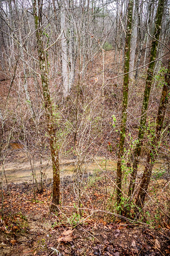 Tall Pines Preserve and South Saluda Church Cemetery-18 | by RandomConnections
