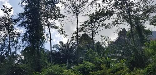 khaosokrainforest khaosok peacefulforest krabithailand krabi