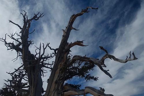 Cedar Breaks National Monument | by Sean Munson