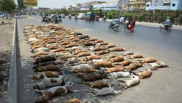 4923 Is it permissible to kill stray dogs in Islam 04