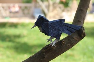 Mocking bird - Roman Diaz | by Ori Samy