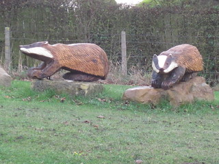 Brotton Badgers   by twiggles
