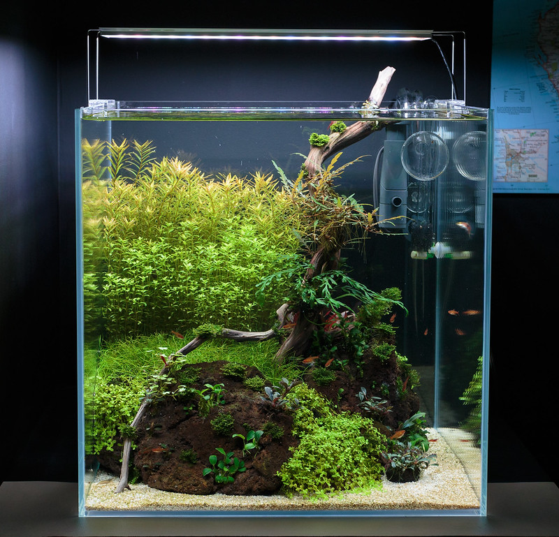 Ventchur's 25g Cube - Planted Tank Journal - Page 2 - The