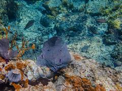 DCL March 2019 Tortola Underwater-217.jpg