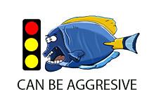 semi aggresive marine