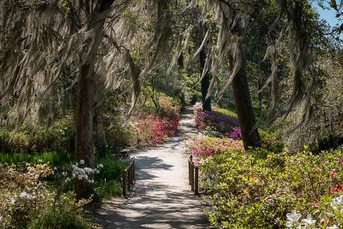 middleton plantation sc gardens grounds charleston azaleas spanishmoss canon landscape nature trails spring