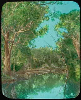 Eucalypt trees on the banks of a watercourse, Queensland, ca. 1910
