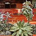 Succulents-Table_Mod_1