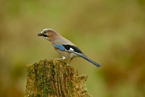 JAY | by tony.cox27