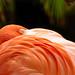 Flamingo by Greg Adams Photography