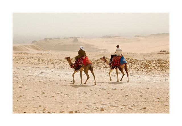 Up Close With the Camel Riders
