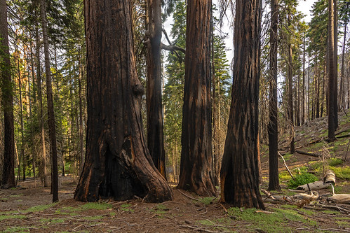 Sequoia National Park | by RuggyBearLA