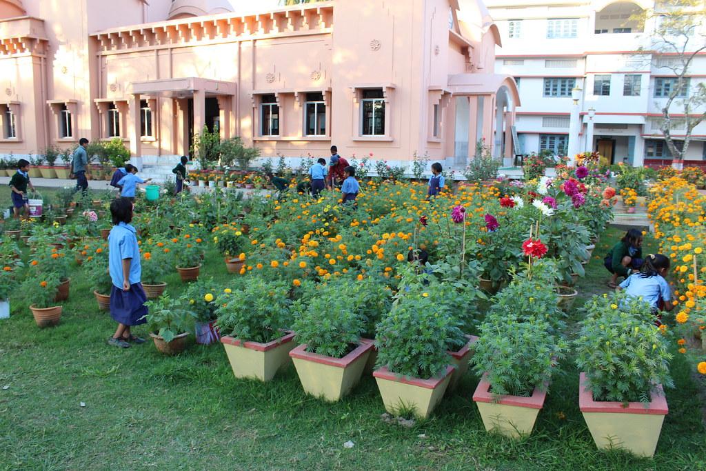 GAP at Karimganj, Assam - Gardening 2