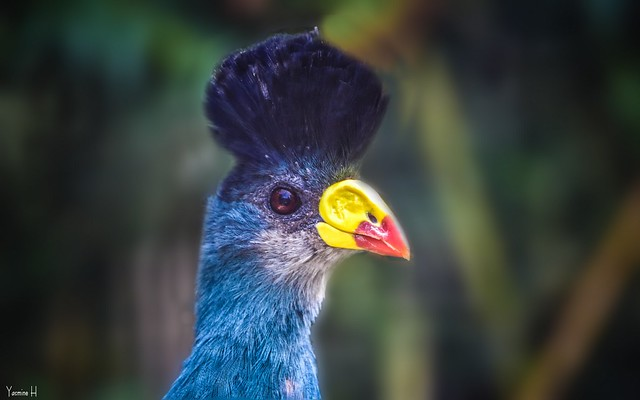 Blue Bird - 6582