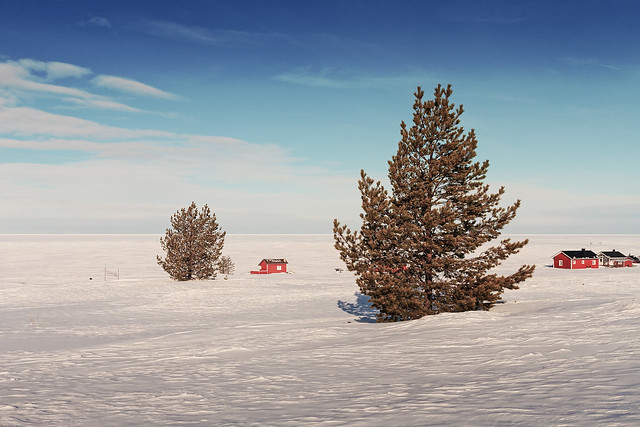 Pine Trees On An Icy Beach