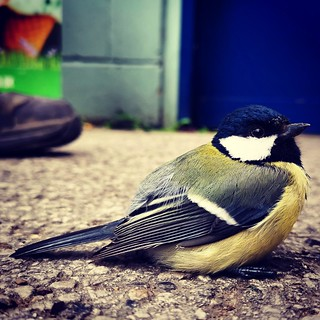 #bluetit #bird #mate20pro #mate20prophoto #mate20pro_camera #Huaweimate20Pro #huaweiphoto #huawei_pic #huaweishot #huaweiphotographers #huawei #bokeh #shot #macro #photography