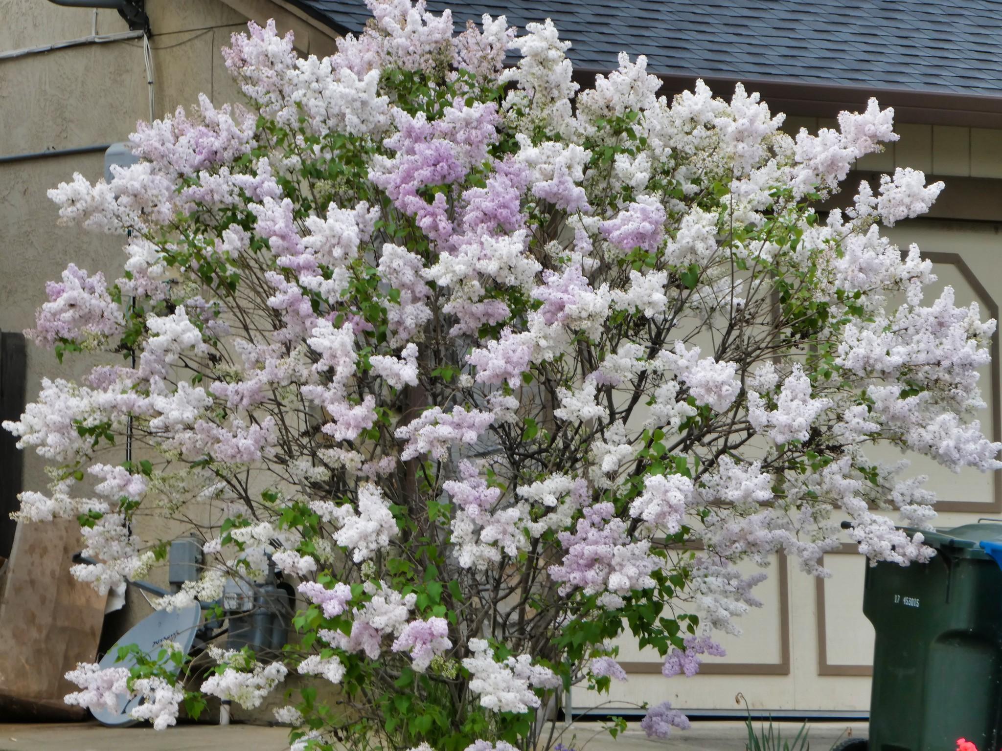 2019-04-11 - Landscape Photography - Front Yards - Flowers & Decorations