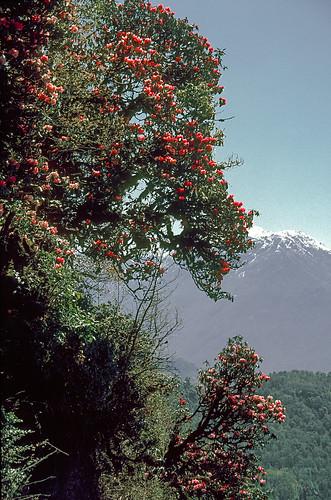 Everest_0053.jpg