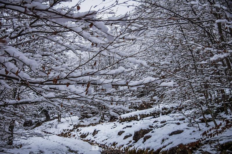 Bòsc de Conangles cubierto de nieve