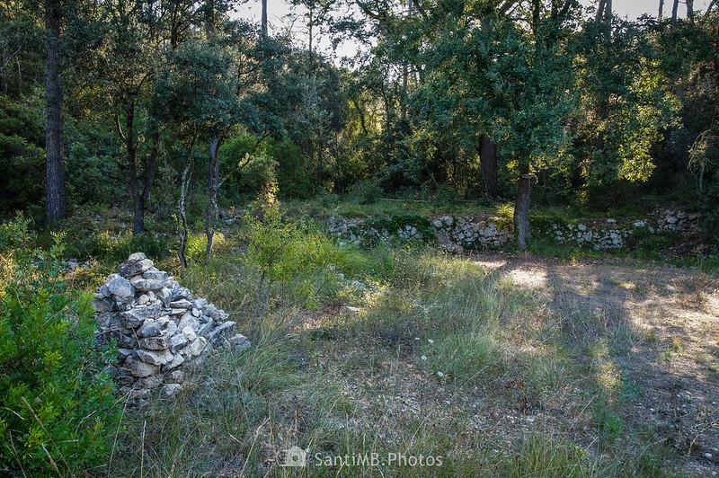 Cerca de la Font de Sant Joan de Viladellops