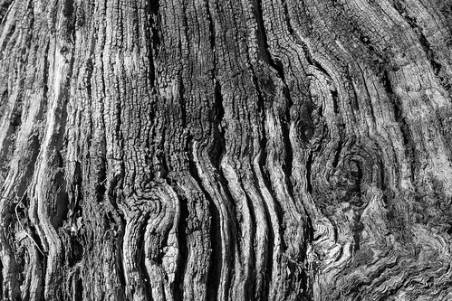 Wood Texture | by Perzec