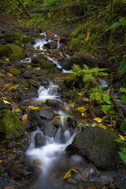 Oahu Autumn Stream