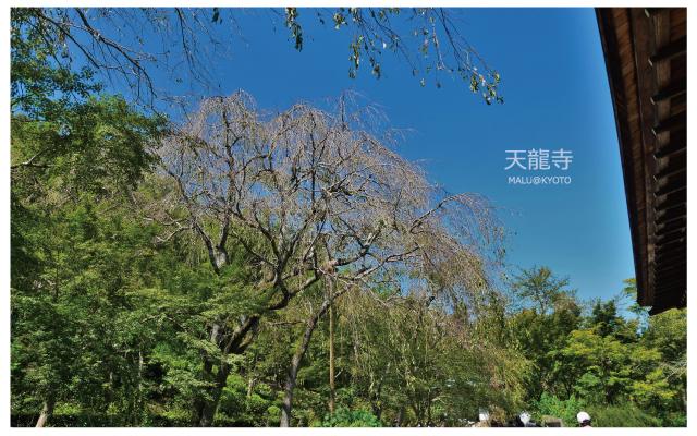 嵐山天龍寺-25